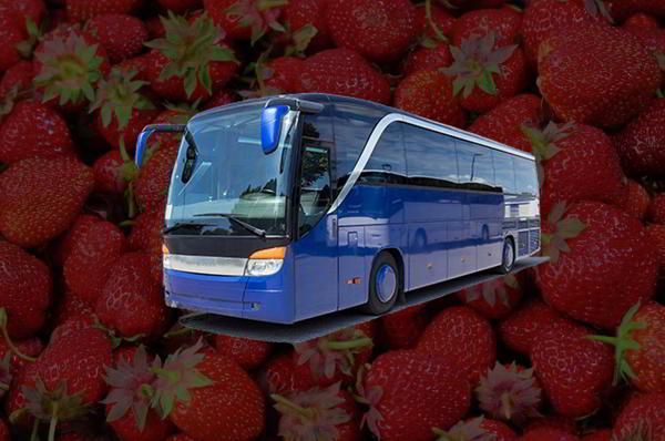 STRAWBERRY FARM DAY TRIP FOR ELDERLY Image